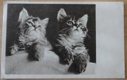 Katzen Cats  Tierschutzverein Wien Und Umgebung - Katzen