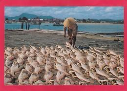 Modern Post Card Of Salted Fish,Malaysia,D38. - Malaysia