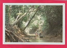 Modern Post Card Of Water Way To Tasek Chini,Malaysia,D38. - Malaysia