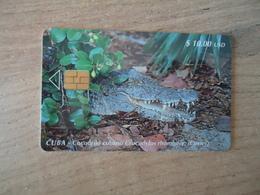 CUBA OLD USED CARDS ANIMALS CROCODYLUS - Cuba