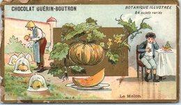 Chromo - Chocolat Guérin Boutron - Botanique Illustrée Le Melon (état :côté, Dos) - Guerin Boutron