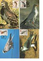 Oiseaux : Lot De 4 Cartes Maximum Rapaces - Arends & Roofvogels