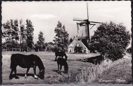 Ca 1960 Langweer De Molen Z/w Blanco - Nederland