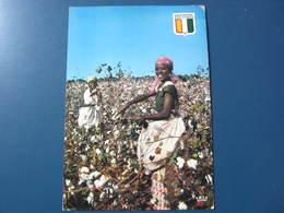 Carte Postale Récolte Du Coton Près De Bouaké - Elfenbeinküste