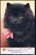 Chat Noir -cat -katze - Poes Met Strik - Cats