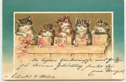 N°14040 - Chats Derrière Une Palissade - Katten