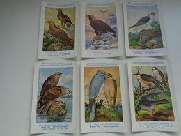 Beau Lot De 10 Cartes Postales Oiseaux  Oiseau  Illustrateur H.Dupond     Mooi Lot Van 10 Postkaarten Van Vogels  Vogel - 5 - 99 Cartes