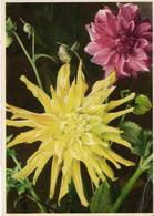 Blumenstrauss Mit Astern Ca 1940-50 - Blumen