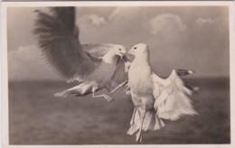 German Feldpost WW2: Postcard Seaguls Fighting From Helgoland - 4. Kompanie Marine-Flak-Abteilung 242 - Militaria