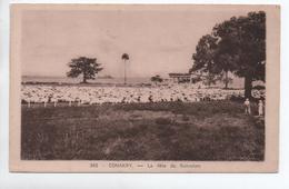 CONAKRY (SENEGAL) - LA FETE DU RAMADAN - Sénégal