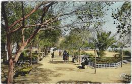 Algerie  Oran Jardin Du Petit Vichy - Oran