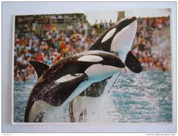 Sea World Miami 1991 Orka Killer Whale - Autres