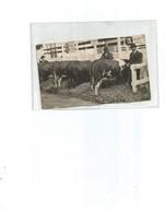 Souvenir Concours Agricole-paris 1939-broutin-aubers A Droite-broutin Estaires A  Gauche - Paysans