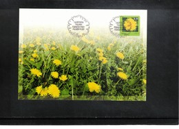 Estonia  2004 Medicinal Plant Dandelion Maximumcard - Heilpflanzen