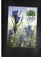 Lithuania  2009 Flower Maximumcard - Pflanzen Und Botanik