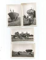 Moisson-région Lilloise-fournes-beaucamps-le Maisnil-aubers-fromelles-wavrin -saibghin-etc..année 1930-4photos - France