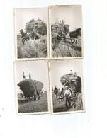 Moisson-région Lilloise-fournes-beaucamps-le Maisnil-aubers-fromelles-wavrin -sainghin-etc..année 1930-4photos - France