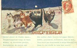 CHOCOLAT DE BEUKELAER - Animaux Habillés