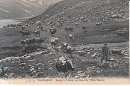 676 - Courmayeur - Italia