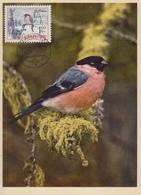 Carte  Maximum  TCHECOSLOVAQUIE    Bouvreuil   1976 - Sperlingsvögel & Singvögel