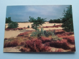 HAZEDUINEN Kalmthoutse-Heide ( Foto A. De Belder / Wenskaart ) Anno 19?? ( Zie Foto Details ) ! - Kalmthout