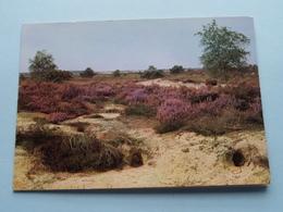 DE MARKGRAAF Kalmthoutse-Heide ( Foto A. De Belder / Wenskaart ) Anno 19?? ( Zie Foto Details ) ! - Kalmthout