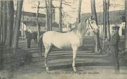 CPA 64 Pyrénées-Atlantiques Pau Haras De Gelos Karam Pur Sang Arabe Militaria Equitation Hippisme Cheval - Pau