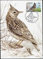 Belarus. 2017. Crested Lark (Galerida Cristata) (Mint) Maximum Card - Belarus