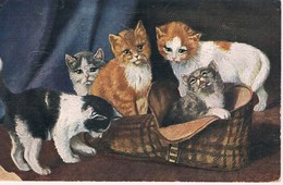 5 Chats -cats- Poezen -katzen -Sperlich - Katten