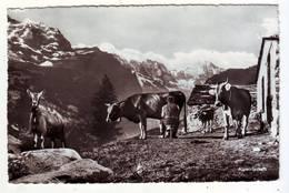 CPSM - Alpwirtschaft - Schweiz