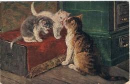 3 Chats  - Cat -katzen - Poesjes -Stocks - Katten