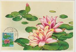 Egypte Carte Maximum 1981 Lotus 1144 - Égypte