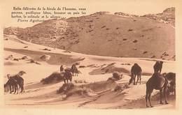 Algerie Texte Pierre Aguetant Enfin Délivrées , Chameaux Au Paturage Dans Le Desert Chameau - Algérie
