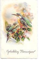 Birds, Oiseaux, Vögel, Eisvogel, Kingfisher, - Oiseaux