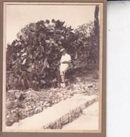 MAJORQUE  1930  POLLENSA  Photo Amateur Format Environ 6,5 Cm X 5,5 Cm - Lieux