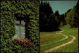 2 X Grün  -  Es Grünt So Grün Der Wald Und Auch Das Fenster  -  DJH / Deutsche Jugend Herberge  -  Ca. 1984    (12405) - Botanik