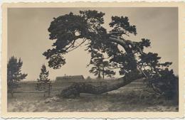 84-848 Estonia Vainopea Triefeldt - Estland