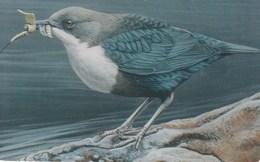 Luxembourg - Cingle Plongeur - Vogel Des Jahres 2003 - TS30 - Luxemburg