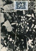 50076 Nouvelle Caledonie, Maximum 1959  Cafè, Le Cafè - Maximumkarten