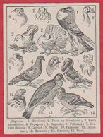 Pigeon. Pigeons. Illustration Adolphe Millot. Pigeonnier. Pigeonniers. Larousse 1931. - Historical Documents