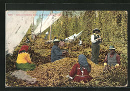 AK Indians Picking Hops, Northwestern Pacific, Hopfenernte - Indianer