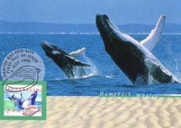 Australia 1999 Nature Of Australia 70c Humpback Whales Maximum Card - Maximumkarten (MC)