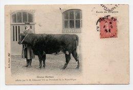 - CPA École De Grignon (78) - Génisse Durham 1904 - Edition B. F. - - Grignon