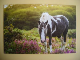 CPM Wild Pony On The Moor, Poney Sauvage - Paarden