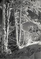 La Neige Dans Le Haut Doubs - 25 - Stainacre - Autres Communes