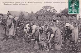 CPA Joué Les Tours (37) Clos La Bouchardière Vin Touraine Vendangeurs Cueillant Le Pineau Fin  Heurtault - Frankrijk