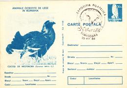Romunia, Animals, Birds, Owls, Carte Postales - Cartas