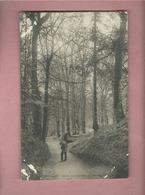 CPA  Abîmée - Bretagne - Etude De Sous Bois , Un Chemin Creux - Bretagne