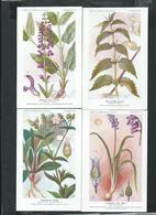 Planches De Botanique Des établissements Fumouze à Paris, 4eme Série De 8 Cartes Sur Les Plantes Médecinales - Medicinal Plants