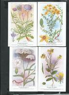 Planches De Botanique Des établissements Fumouze à Paris, 8eme Série De 8 Cartes Sur Les Plantes Médecinales - Medicinal Plants